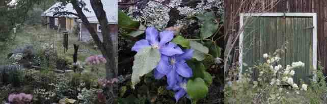 Lillpite trädgård WP