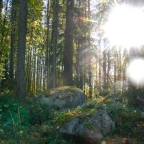 solvilda skog